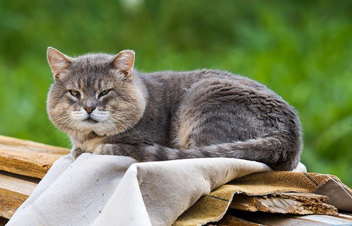 Así debes cuidar un gato anciano