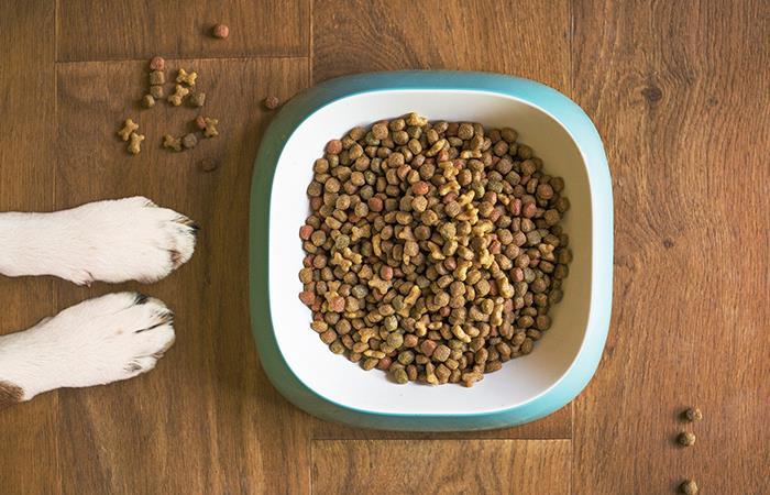 Cuidados que debes tener con la comida de tu mascota. Foto: Pixabay