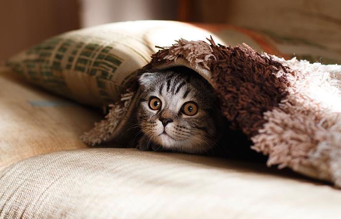 Los gatos pueden verse afectados por la cuarentena. Foto: Pixabay