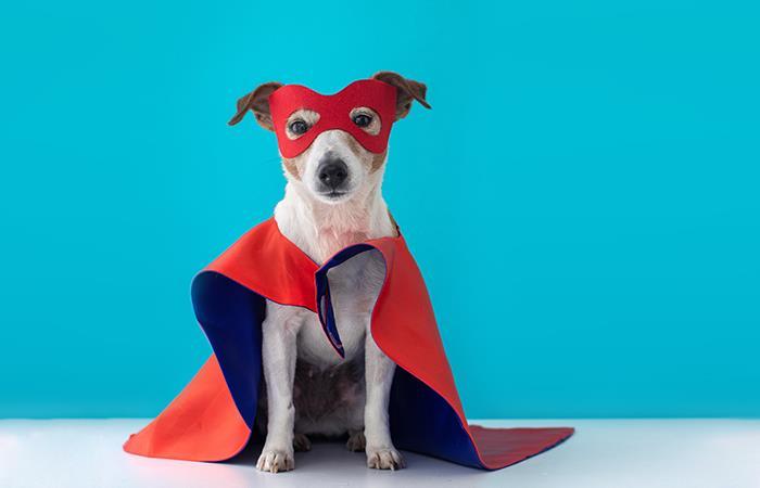 Estudio revela que los perros hacen lo necesario para salvar a sus dueños. Foto: Shutterstock