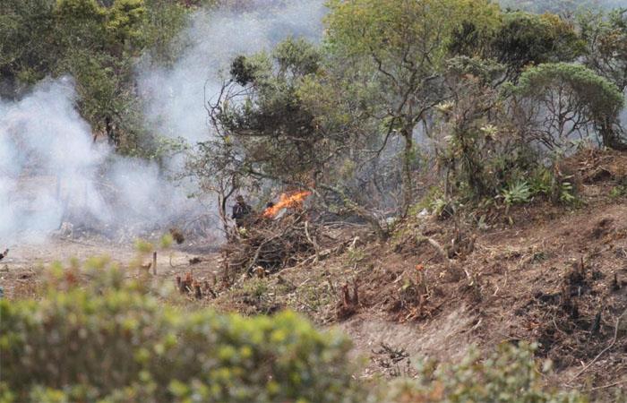 Los invasores trataron de alejar a las autoridades incendiando algunos árboles de la zona. Foto: Twitter