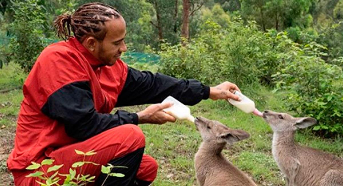 Lewis Hamilton es un amante de los animales. Foto: Perfil oficial Instagram @lewishamilton