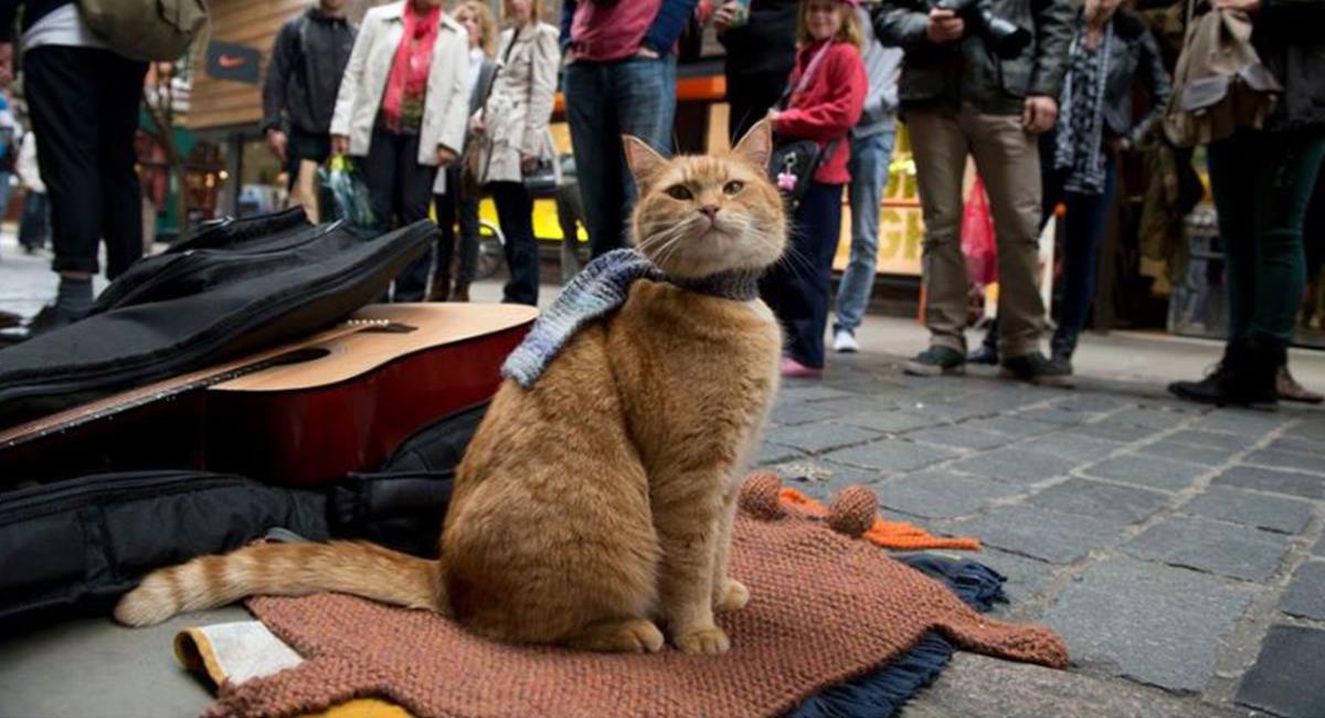 Fallece Bob, el gato protagonista de libros y películas. Foto: Facebook /James Bowen & Streetcat Bob