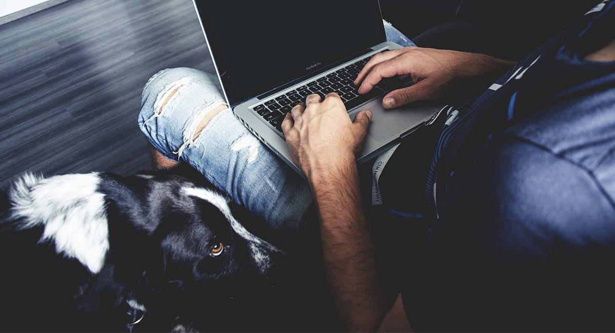 Encuentra el equilibrio entre tu trabajo y el cuidado de tu mascota. Foto: Pixabay