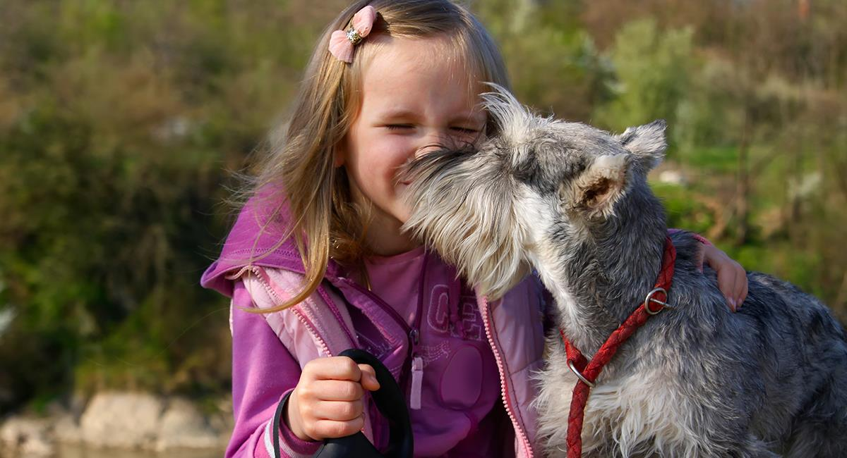 Razas de perro recomendadas para personas alérgicas. Foto: Shutterstock