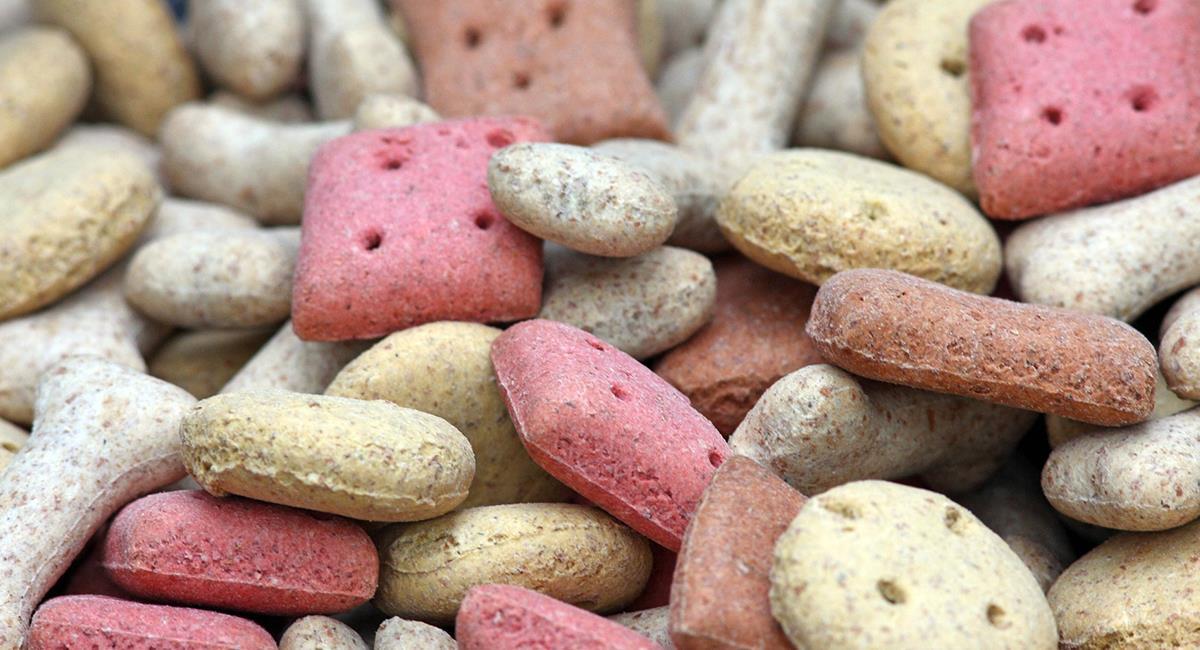 Tips para no fallar al elegir la comida para tu mascota. Foto: Pixabay