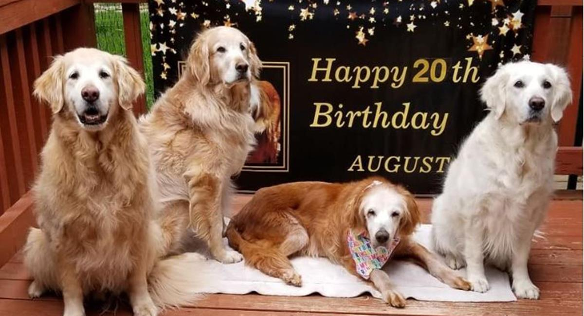 August celebrando su cumpleaños número 20. Foto: Facebook /GoldHeart Golden Retrievers Rescue