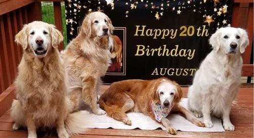 August Golden Retriever 20 años de edad