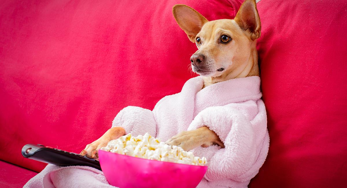 ¿Te has preguntado qué ve tu mascota cuando mira la pantalla del televisor?. Foto: Shutterstock