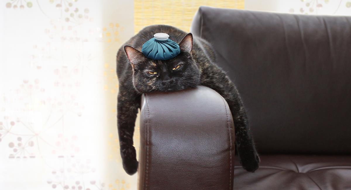 Estos son los virus más comunes en los gatos. Foto: Shutterstock