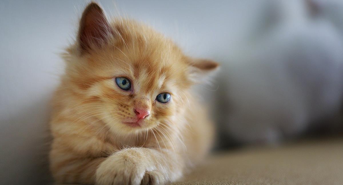 Conoce el verdadero significado de la presencia de gatos en tus sueños. Foto: Pixabay
