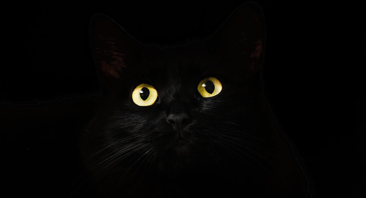 Los ojos de los gatos generalmente son amarillos o dorados. Foto: Pixabay