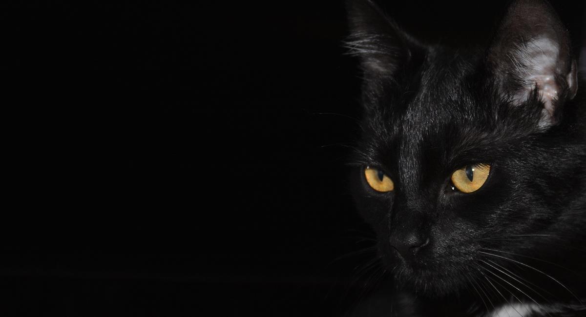 10 cosas que no sabías sobre los gatos de color negro. Foto: Pixabay