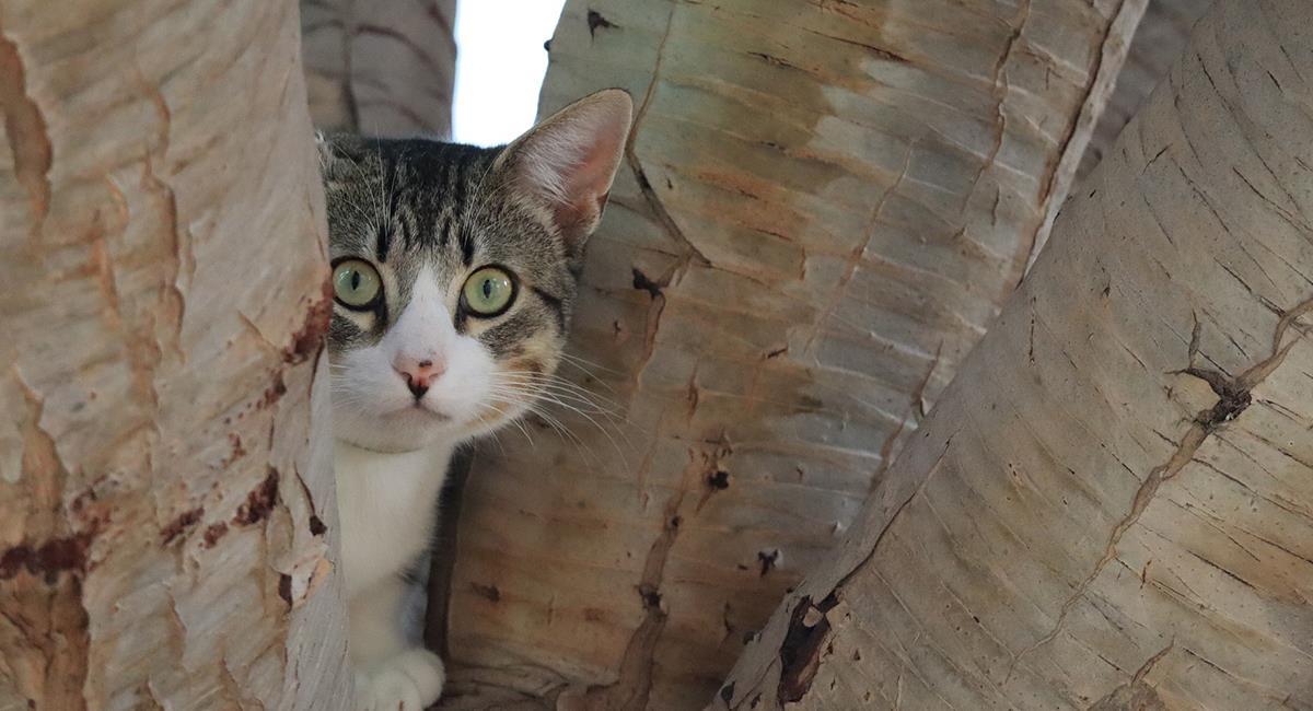 Los gatos sienten un profundo miedo a estas 3 cosas. Foto: Pixabay