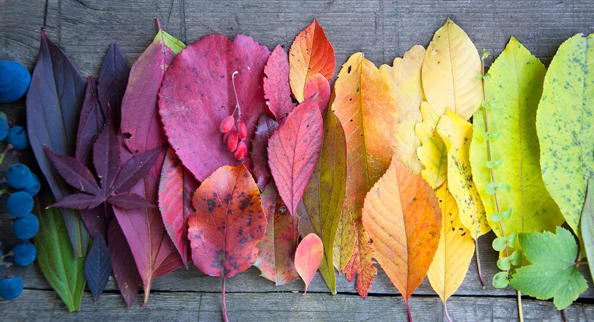 Los colores tienen un significado especial en los rituales y temas esotéricos. Foto: Shutterstock
