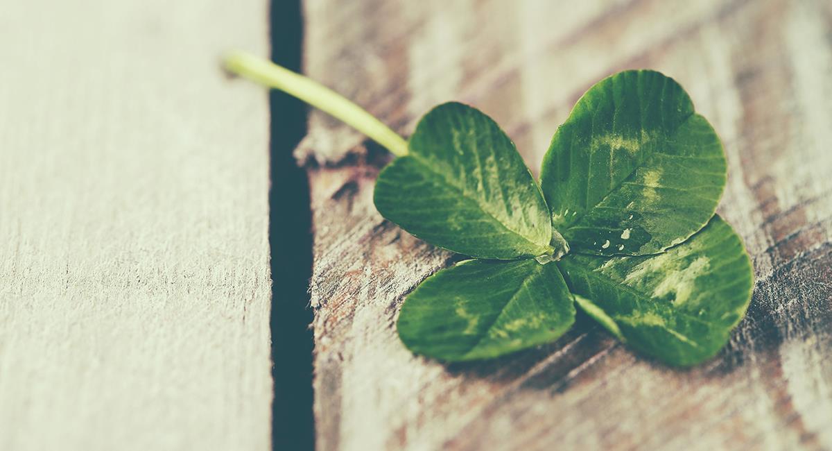 Esto es lo que pasa si encuentras un trébol de cuatro hojas. Foto: Shutterstock