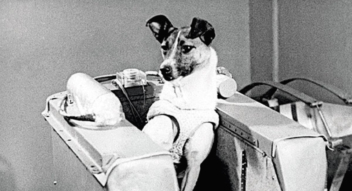 Laika, el primer ser vivo en orbitar la tierra. Foto: Twitter @arr1910