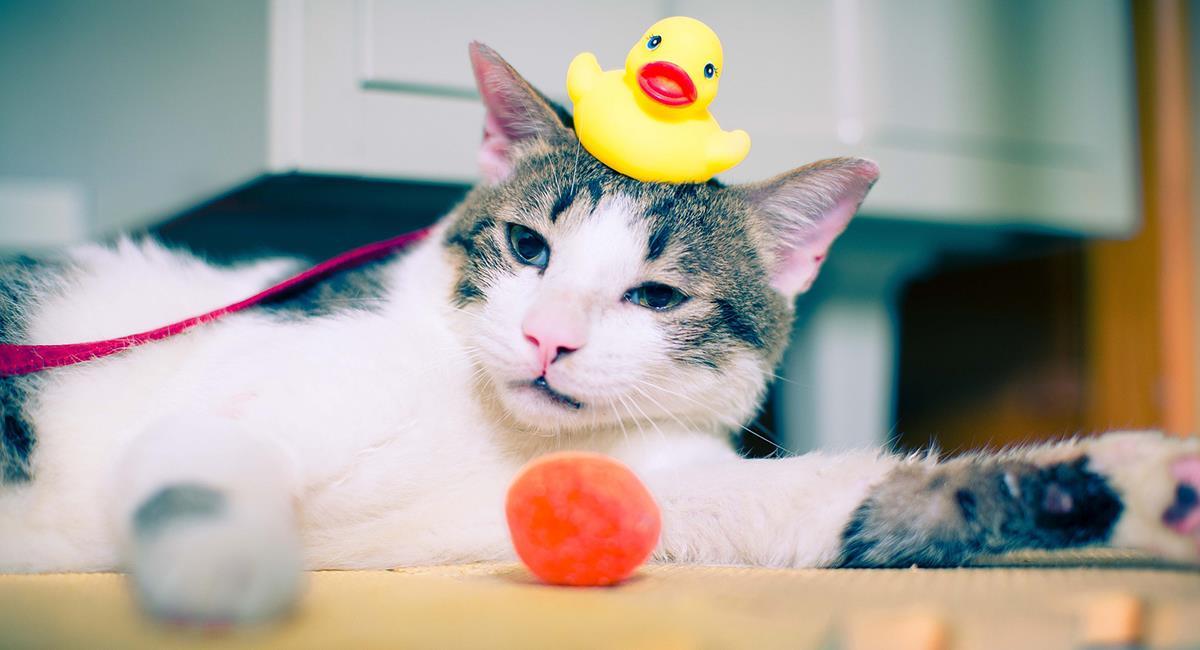 7 increíbles juegos en casa para perros y gatos. Foto: Pixabay