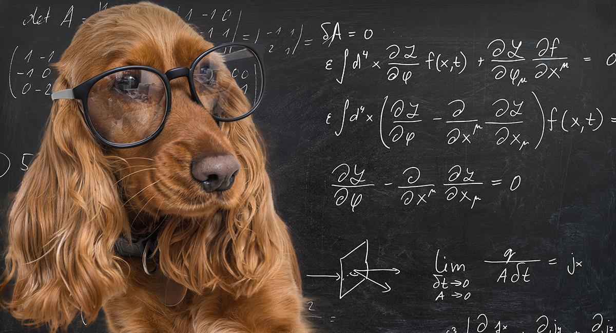 Te sorprenderás con 5 datos sobre el cerebro de los perros. Foto: Shutterstock
