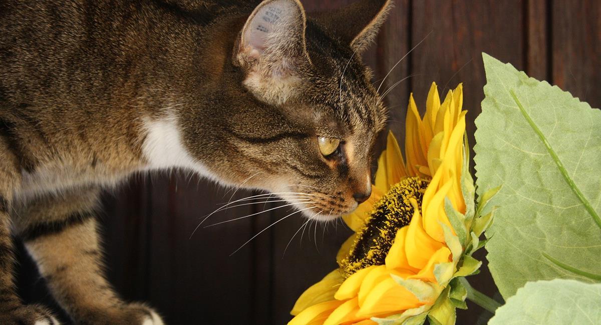 Si quieres a tu gato, debes deshacerte de estás plantas pronto. Foto: Pixabay