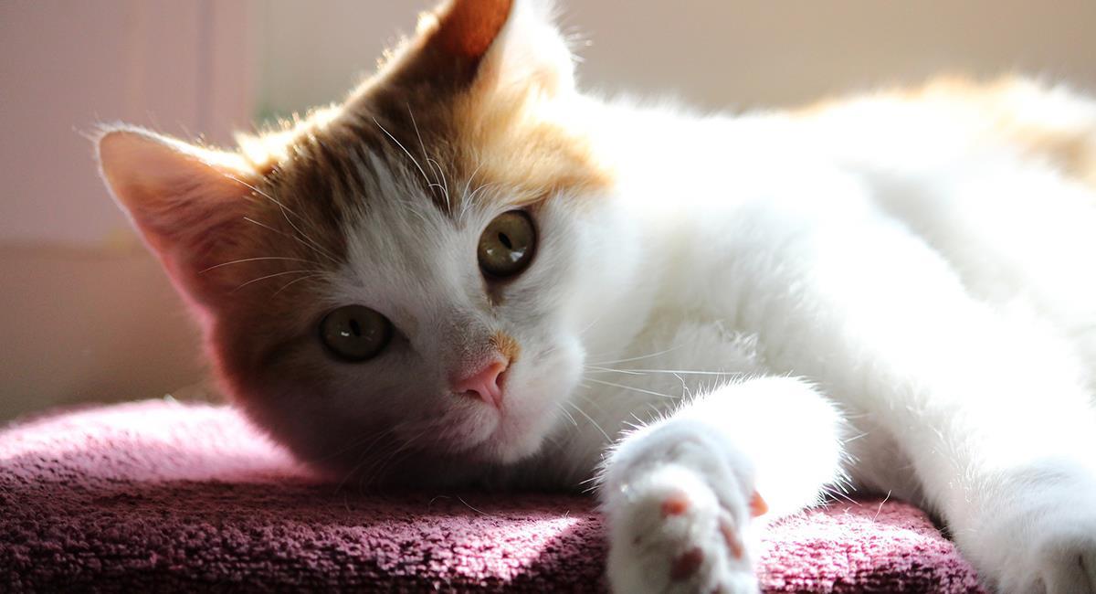 ¿Qué les encanta a los gatos? Te lo contamos. Foto: Pixabay