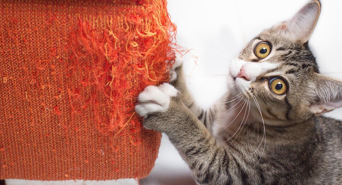 Trucos para que tu gato deje de dañarte los muebles de tu hogar. Foto: Shutterstock