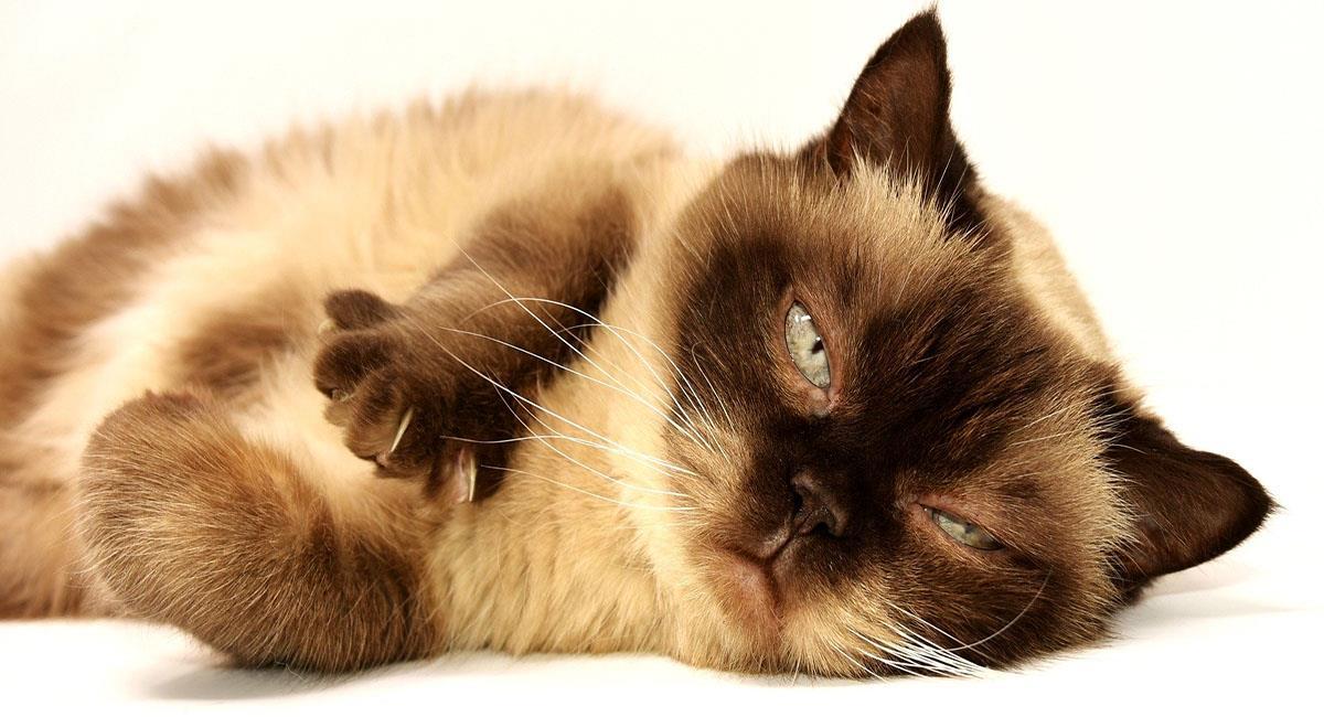 A los bigotes de los gatos se les llama vibrisas. Foto: Pixabay