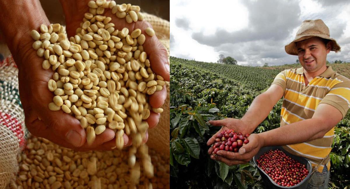 La cosecha cafetera se recoge entre agosto y diciembre. Foto: Facebook Federación Nacional de Cafeteros de Colombia