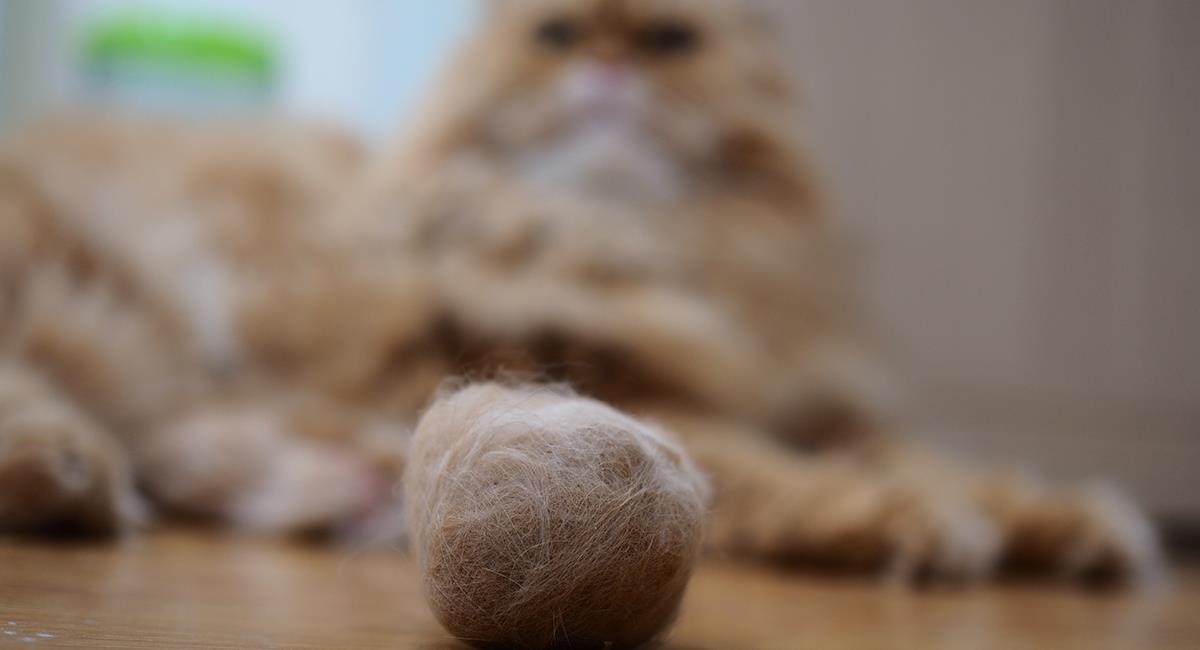 Las bolas de pelo en los gatos pueden generar complicaciones en su salud. Foto: Shutterstock
