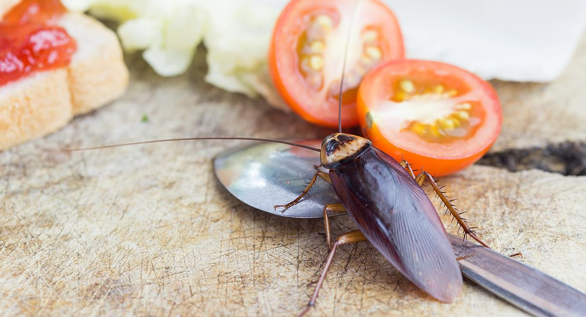 ¿Qué pasa si ves cucarachas en tus sueños?. Foto: Shutterstock