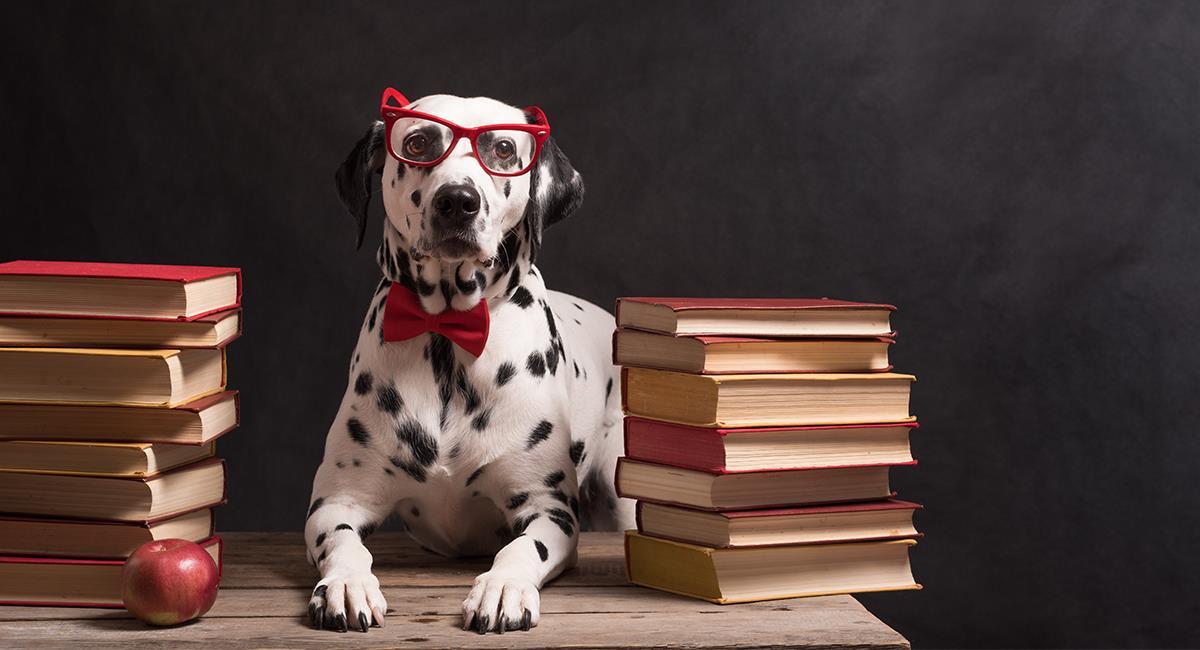Conoce a los perros más inteligentes y obedientes del mundo. Foto: Shutterstock