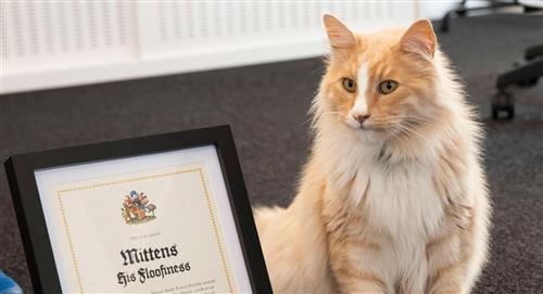 Mittens, el más famoso gato de Nueva Zelanda