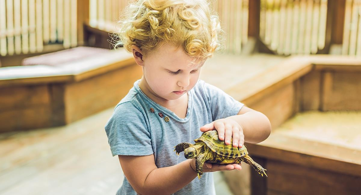 Descubre cuál es la mascota ideal para los niños. Foto: Shutterstock