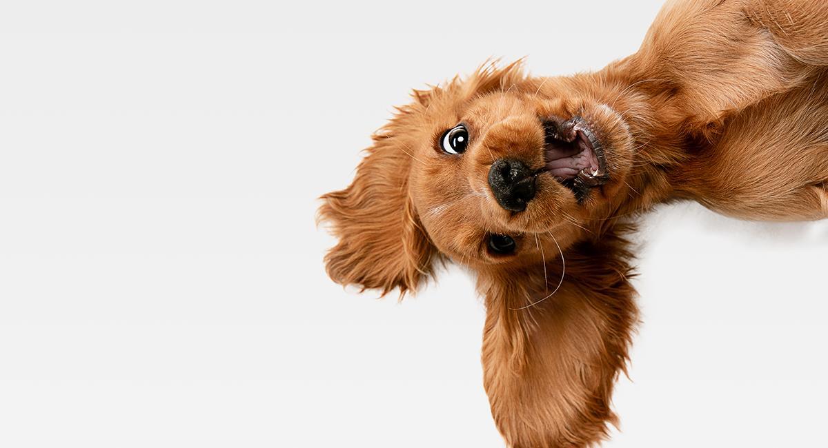 Los comportamientos extraños de tu perro tienen una explicación. Foto: Shutterstock