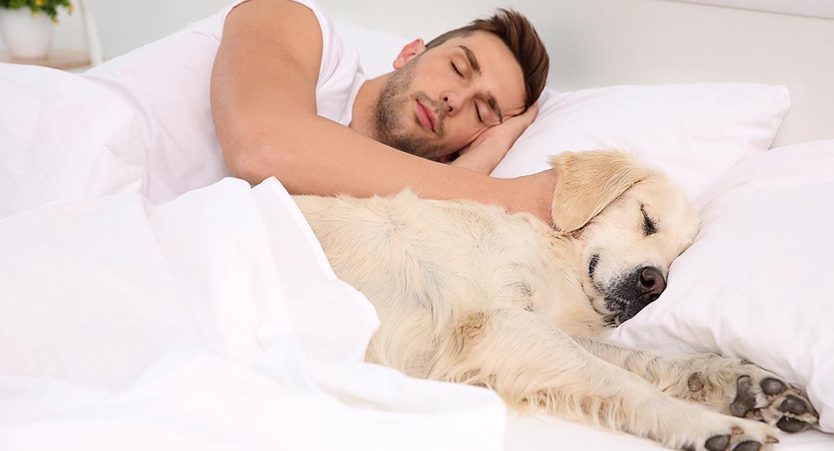 ¿Es recomendable o no dormir con tu perro en la misma habitación?. Foto: Shutterstock