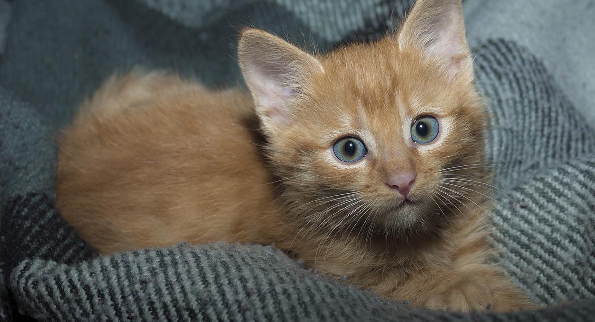 Los gatos son muy animales muy importantes para el Feng Shui. Foto: Pixabay