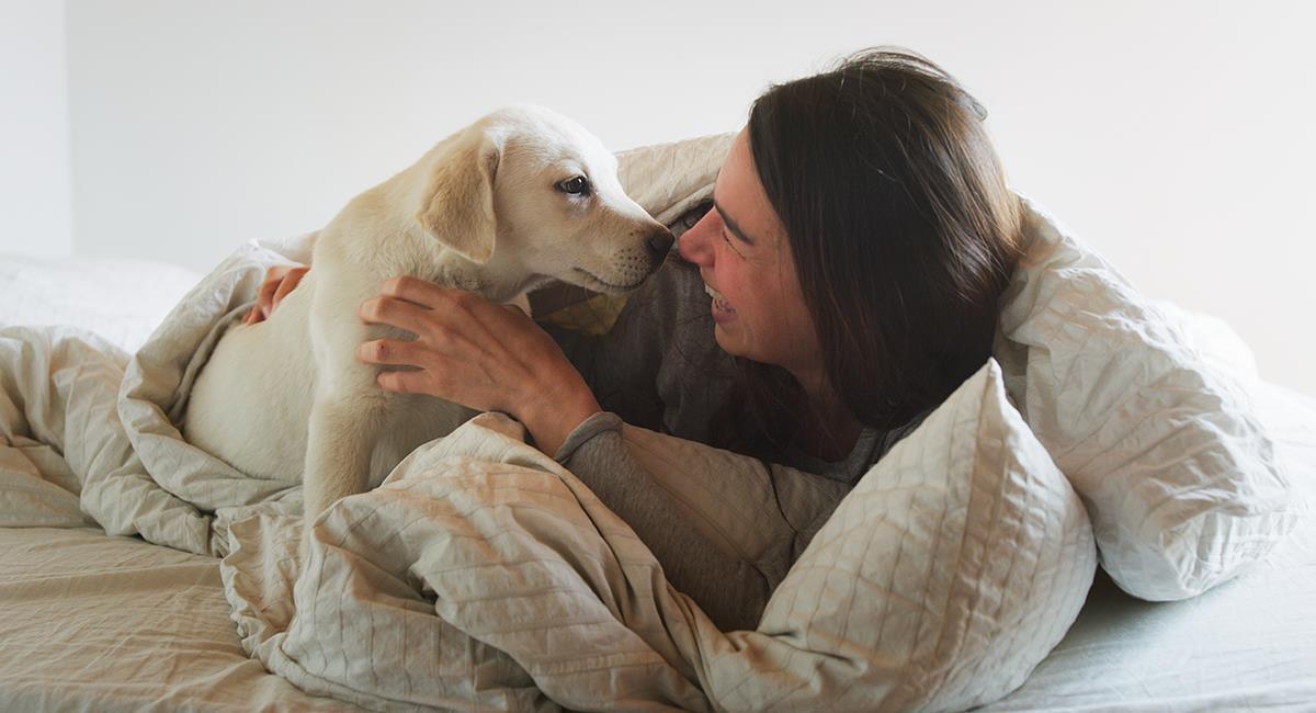 Estas son las razones por las que deberías tener un perro en casa. Foto: Shutterstock