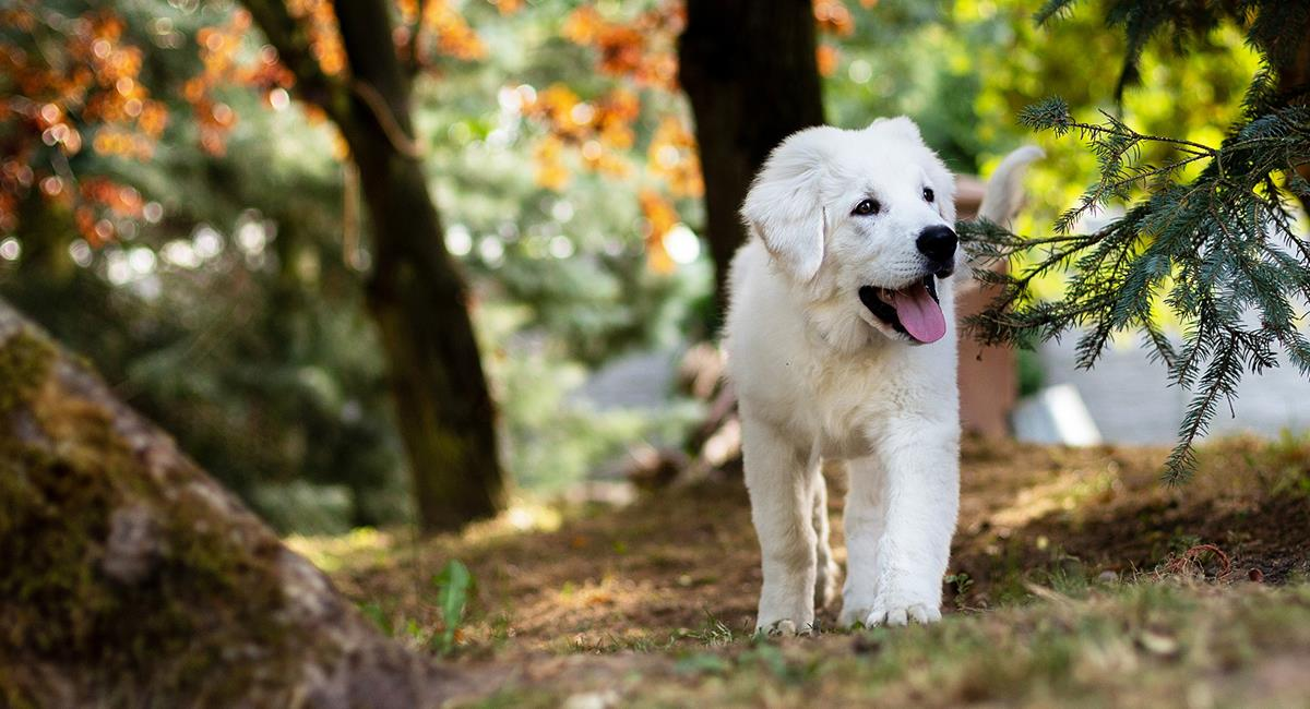 Te contamos cuál es el significado de ver perros en tus sueños. Foto: Pixabay