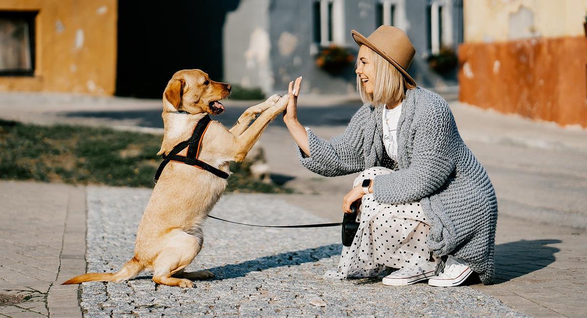 Esta es la mascota que deberías tener en casa según tu signo zodiacal. Foto: Pixabay