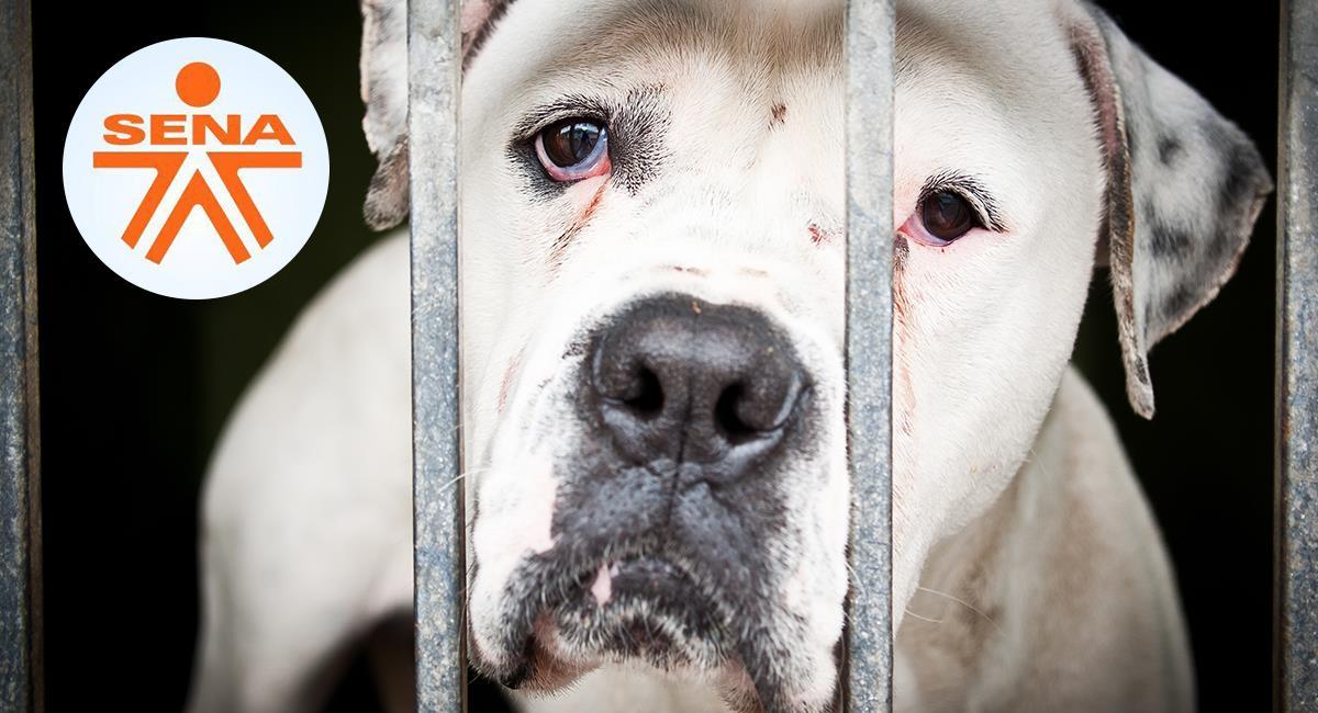 Metían a perritos en bolsas para asfixiarlos: Denuncian presunto maltrato animal