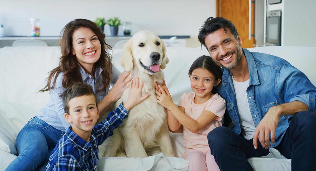 Top 5 de las mejores razas de perro para las familias. Foto: Shutterstock