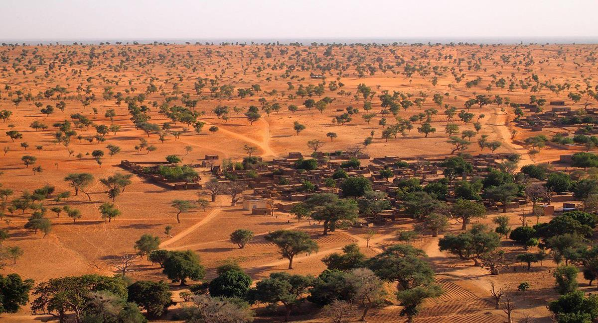 Con apoyo de imágenes satelitales de la Nasa se realiza un recuento de árboles en el desierto del Sahara. Foto: Martin Brandt