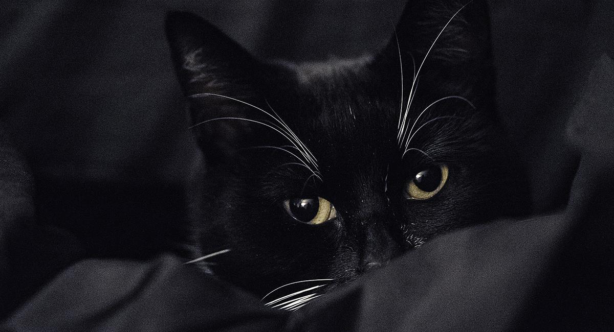 Verdad o mentira: desmintiendo 5 mitos más populares sobre los gatos. Foto: Pixabay