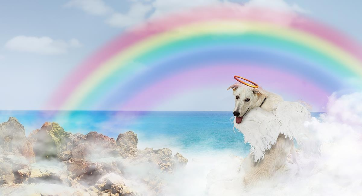 El Puente del Arcoíris: el lugar donde descansan las mascotas luego de fallecer. Foto: Shutterstock