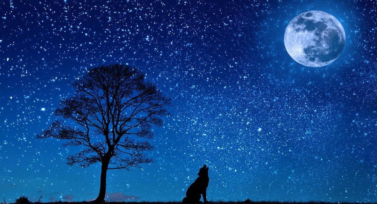La NASA confirmó la existencia de agua en la Luna. Foto: Pixabay