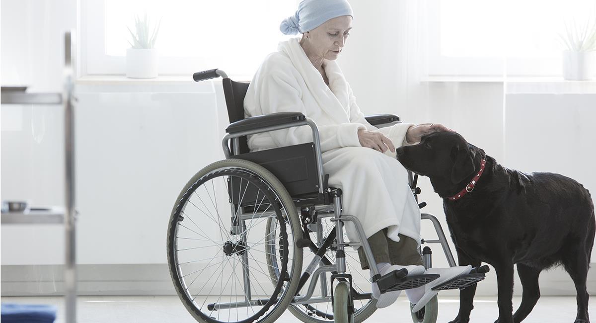 Sabías qué: los perros son capaces de detectar cuando una persona va a morir. Foto: Shutterstock