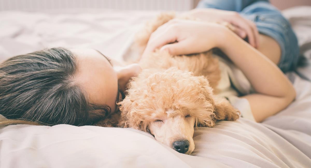 Cada uno en su cama: 6 situaciones en las que no deberías dormir con tu mascota. Foto: Shutterstock