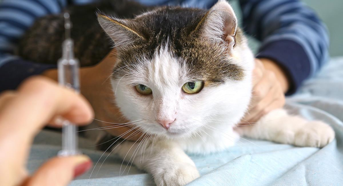 Diabetes en perros y gatos: Tu mascota podría tener síntomas sin que lo sepas. Foto: Shutterstock