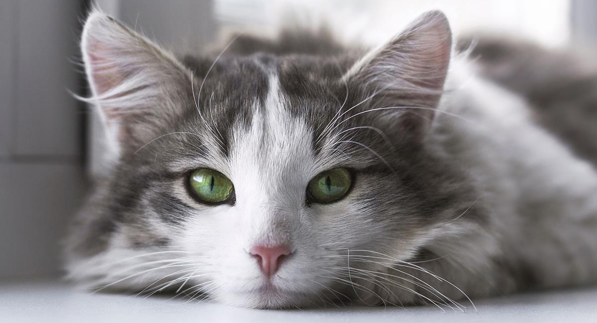 Los gatos tienen 5 poderes místicos que debes conocer. Foto: Pixabay