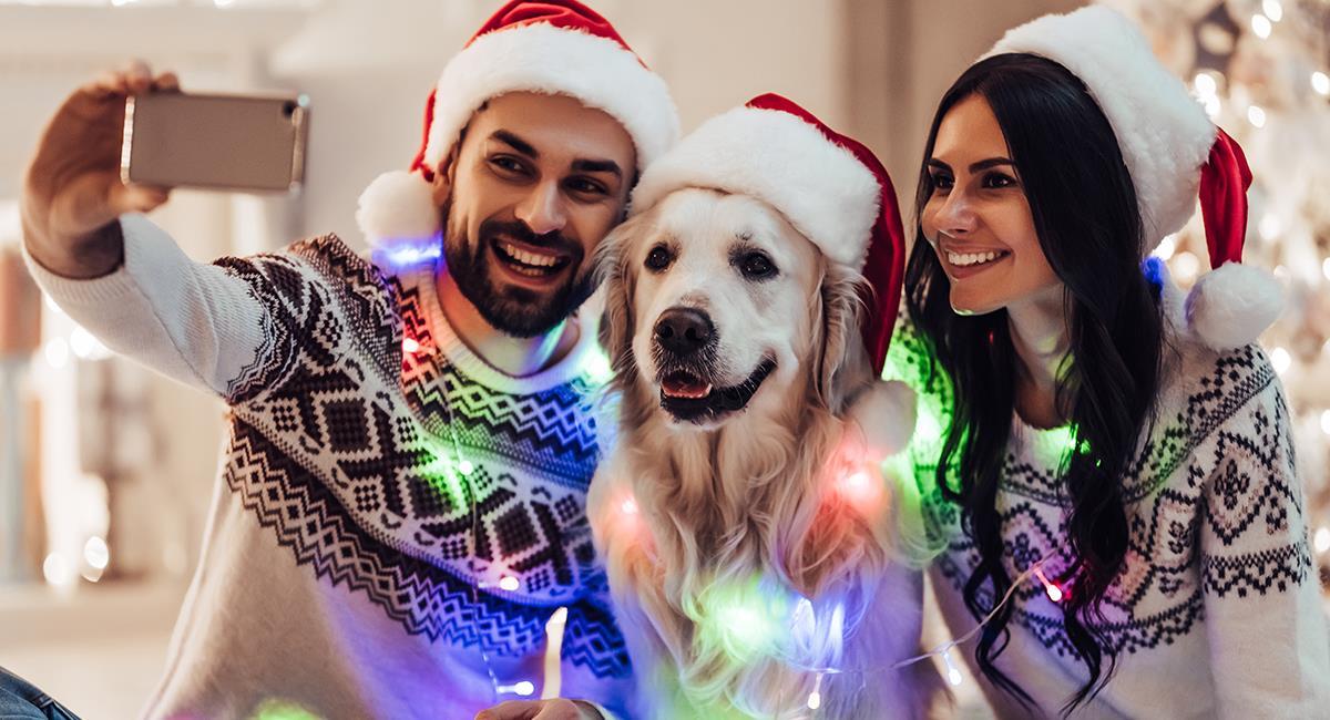 Mascotas en Navidad: 5 medidas de precaución que debes tener en cuenta en esta época. Foto: Shutterstock